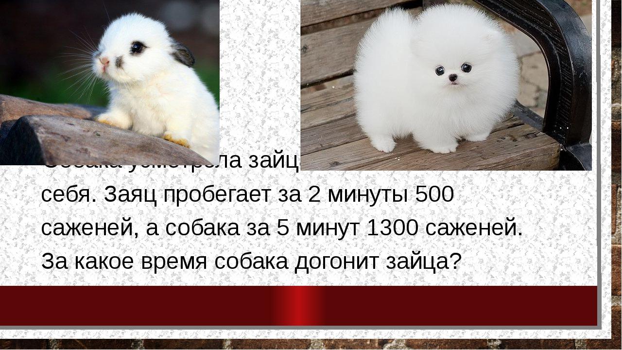 Собака усмотрела зайца в 150 саженей от себя. Заяц пробегает за 2 минуты 500...