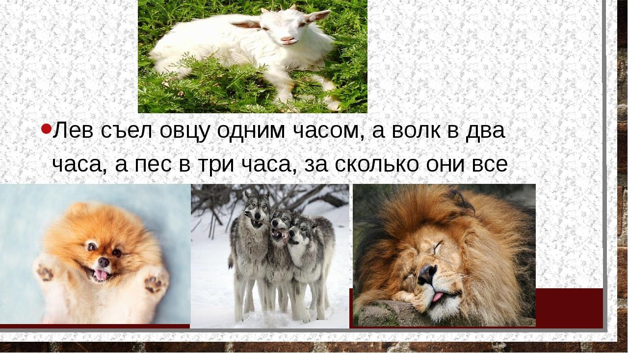 Лев съел овцу одним часом, а волк в два часа, а пес в три часа, за сколько о...
