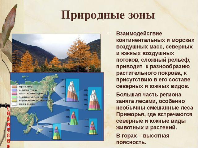 Природные зоны Взаимодействие континентальных и морских воздушных масс, север...