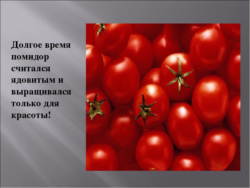 Долгое время помидор считался ядовитым и выращивался только для красоты!