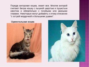 Порода ангорская кошка, знают все. Многие ангорой считают белую кошку с пышно