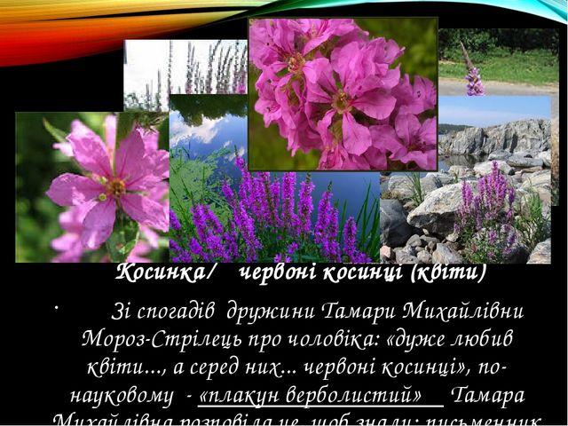 Косинка ← червоні косинці (квіти) Зі спогадів дружини Тамари Михайлівни Моро...