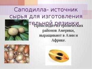 Саподилла- источник сырья для изготовления жевательной резинки Происходит из