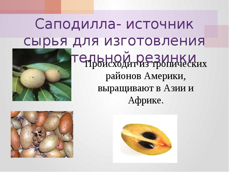 Саподилла- источник сырья для изготовления жевательной резинки Происходит из...
