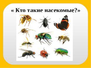 « Кто такие насекомые?»