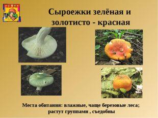 Места обитания: влажные, чаще березовые леса; растут группами , съедобны Сыро
