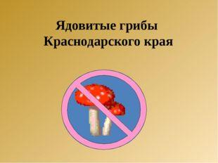 Ядовитые грибы Краснодарского края