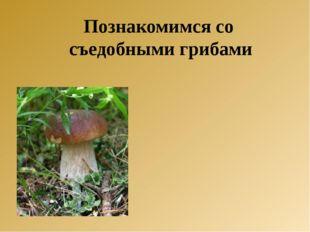 Познакомимся со съедобными грибами