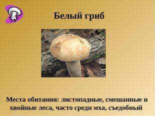 Места обитания: листопадные, смешанные и хвойные леса, часто среди мха, съед
