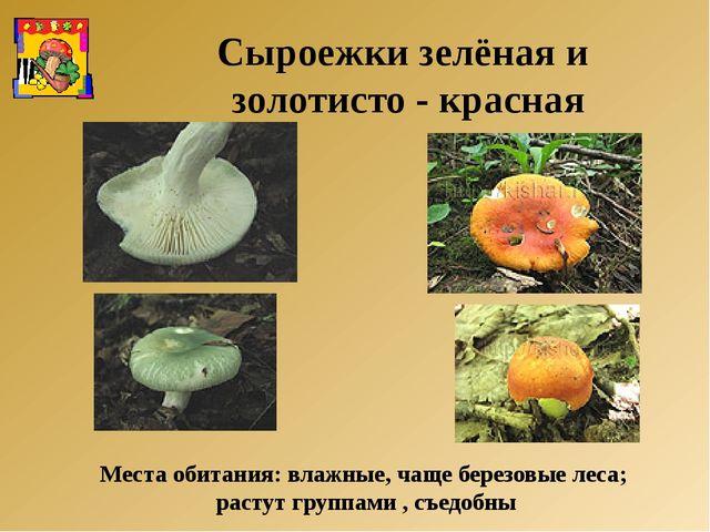 Места обитания: влажные, чаще березовые леса; растут группами , съедобны Сыро...