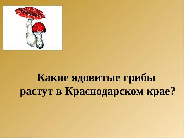 Какие ядовитые грибы растут в Краснодарском крае?