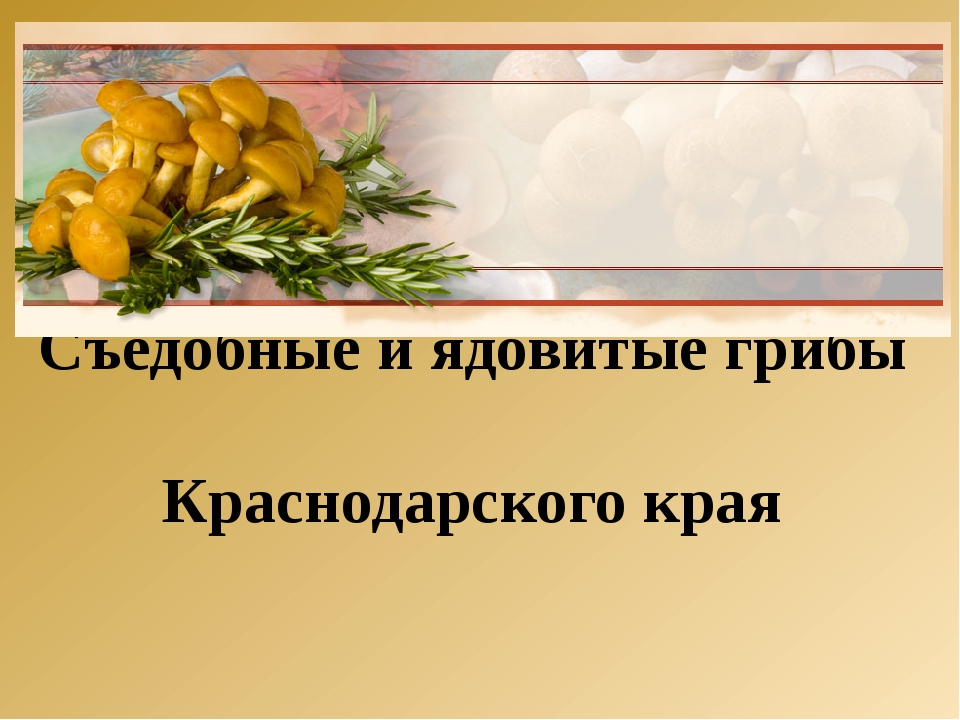 Съедобные и ядовитые грибы Краснодарского края