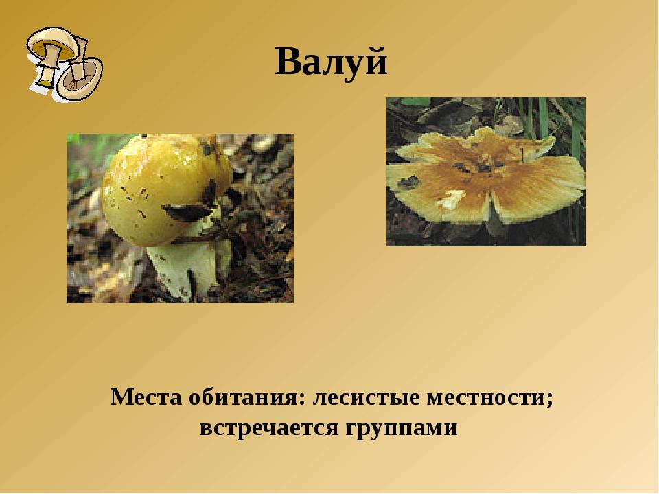 Места обитания: лесистые местности; встречается группами Валуй