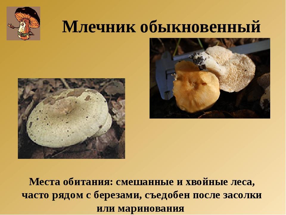 Места обитания: смешанные и хвойные леса, часто рядом с березами, съедобен по...