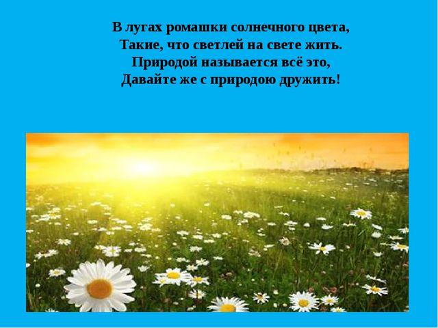 В лугах ромашки солнечного цвета, Такие, что светлей на свете жить. Природой...