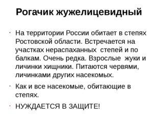Рогачик жужелицевидный На территории России обитает в степях Ростовской облас
