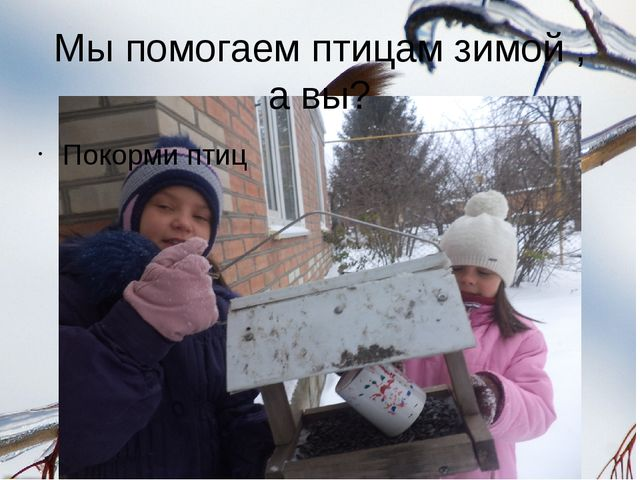 Мы помогаем птицам зимой , а вы? Покорми птиц