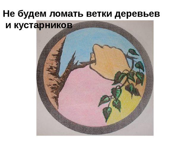 Не будем ломать ветки деревьев и кустарников
