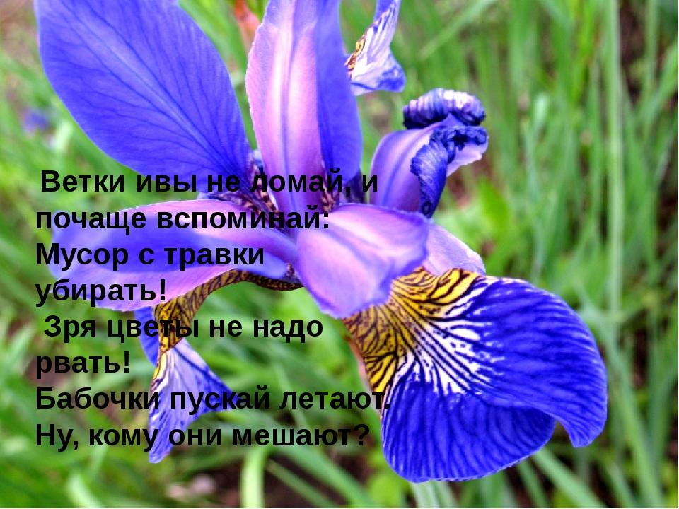 Ветки ивы не ломай, и почаще вспоминай: Мусор с травки убирать! Зря цветы не...