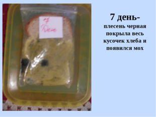 7 день- плесень черная покрыла весь кусочек хлеба и появился мох