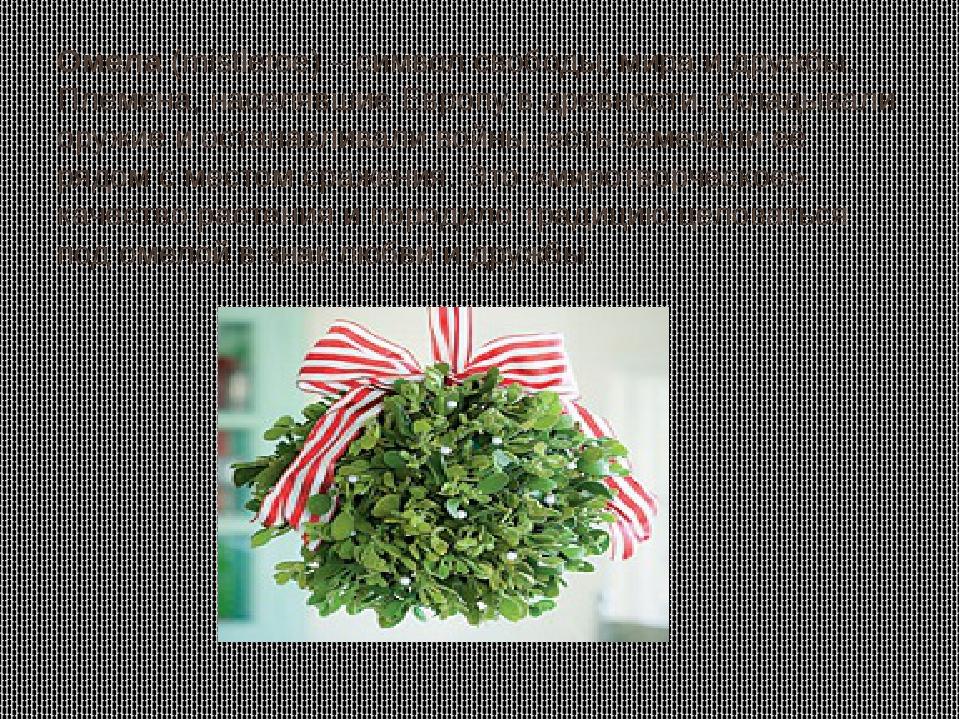 Омела (mistletoe) – символ свободы, мира и дружбы. Племена, населявшие Европу...