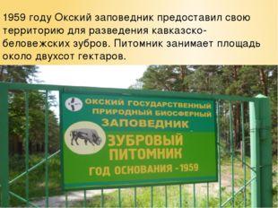 1959 году Окский заповедник предоставил свою территорию для разведения кавказ