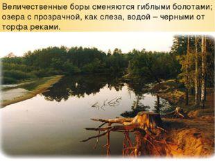 Величественные боры сменяются гиблыми болотами; озера с прозрачной, как слеза