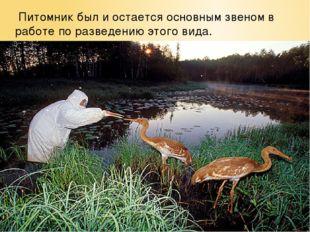 Питомник был и остается основным звеном в работе по разведению этого вида.