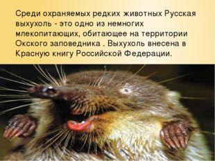 Среди охраняемых редких животных Русская выхухоль - это одно из немногих млек