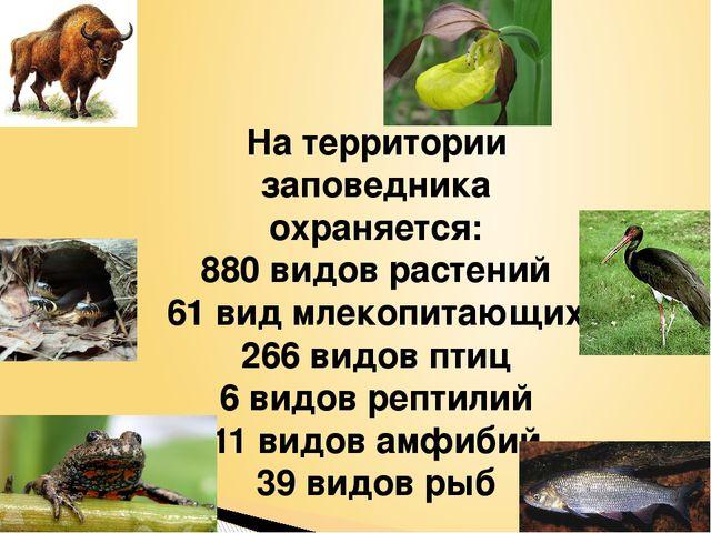 На территории заповедника охраняется: 880 видов растений 61 вид млекопитающих...