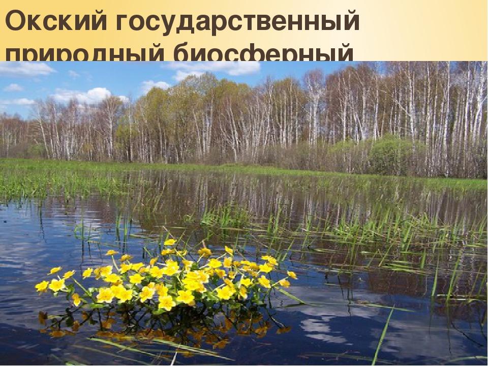 Окский государственный природный биосферный заповедник.