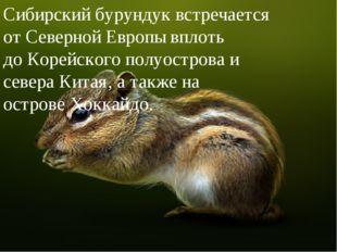 Сибирский бурундук встречается отСеверной Европывплоть доКорейского полуо
