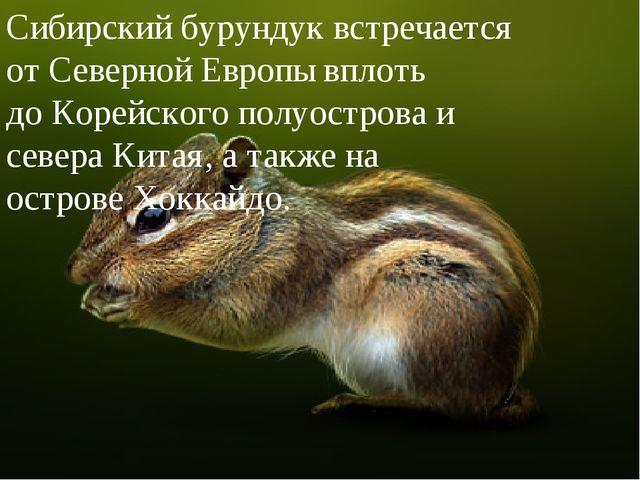 Сибирский бурундук встречается отСеверной Европывплоть доКорейского полуо...