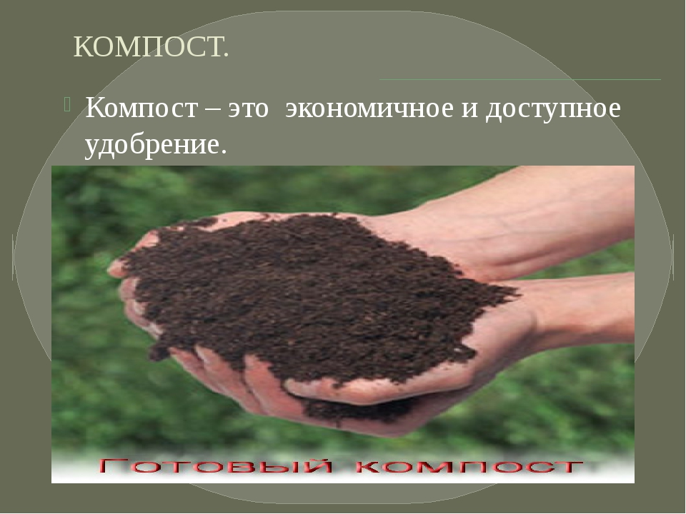 КОМПОСТ. Компост – это экономичное и доступное удобрение.