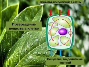 Вещества, выделяемые клеткой Превращение веществ в клетке Вещества, поступаю