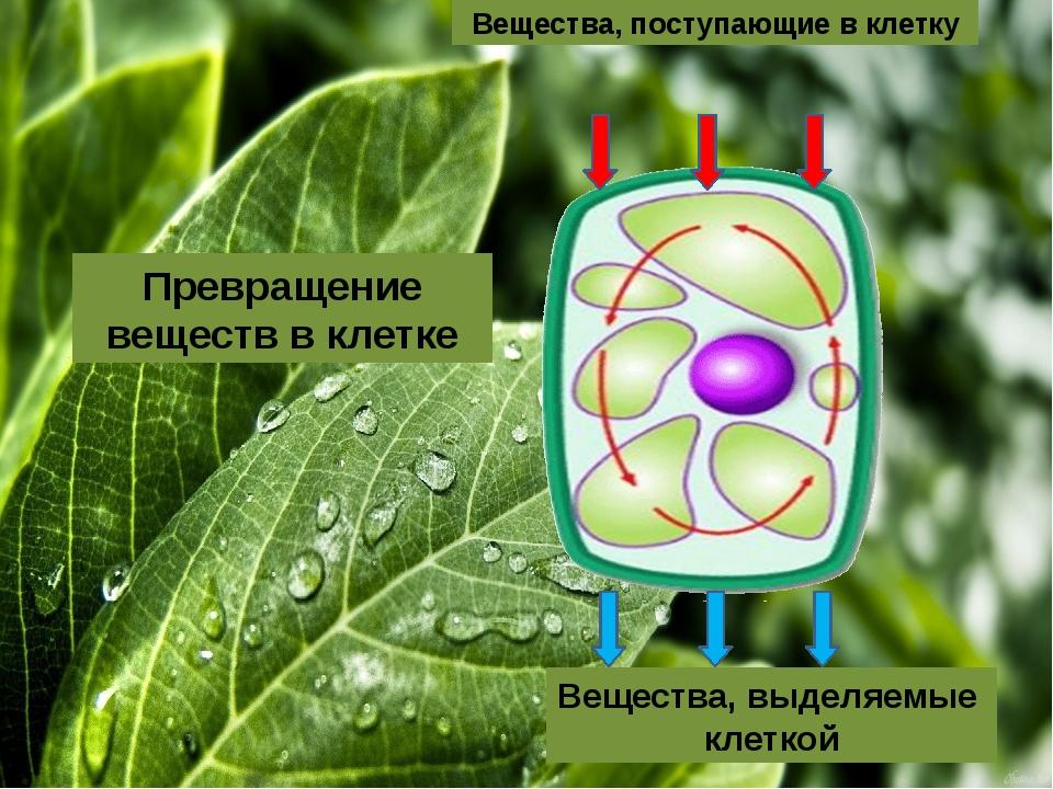 Вещества, выделяемые клеткой Превращение веществ в клетке Вещества, поступаю...