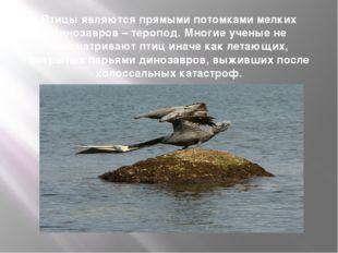 Птицы являются прямыми потомками мелких динозавров – теропод. Многие ученые н