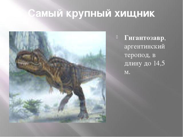 Самый крупный хищник Гигантозавр, аргентинский теропод, в длину до 14,5 м.
