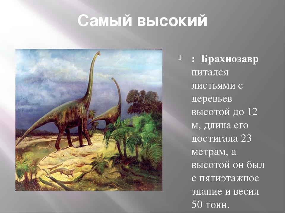 Самый высокий : Брахнозавр питался листьями с деревьев высотой до 12 м, длина...