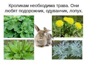 Кроликам необходима трава. Они любят подорожник, одуванчик, лопух.