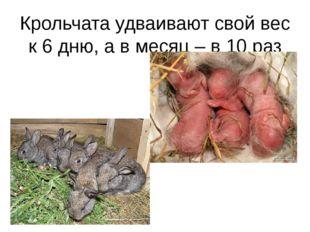 Крольчата удваивают свой вес к 6 дню, а в месяц – в 10 раз
