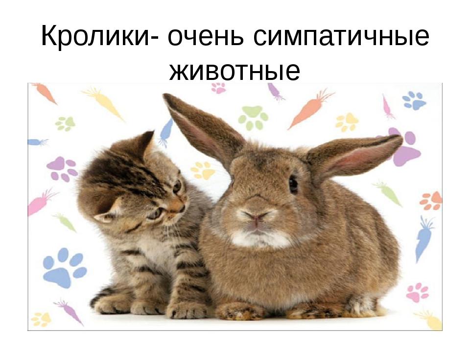 Кролики- очень симпатичные животные