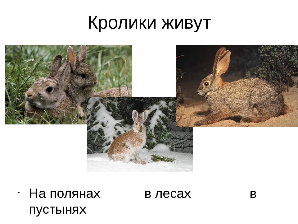 Кролики живут На полянах в лесах в пустынях