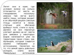 Летят они в края, где условия жизни не сильно отличаются от места их гнездова