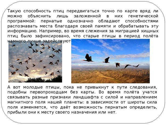Такую способность птиц передвигаться точно по карте вряд ли можно объяснить л...
