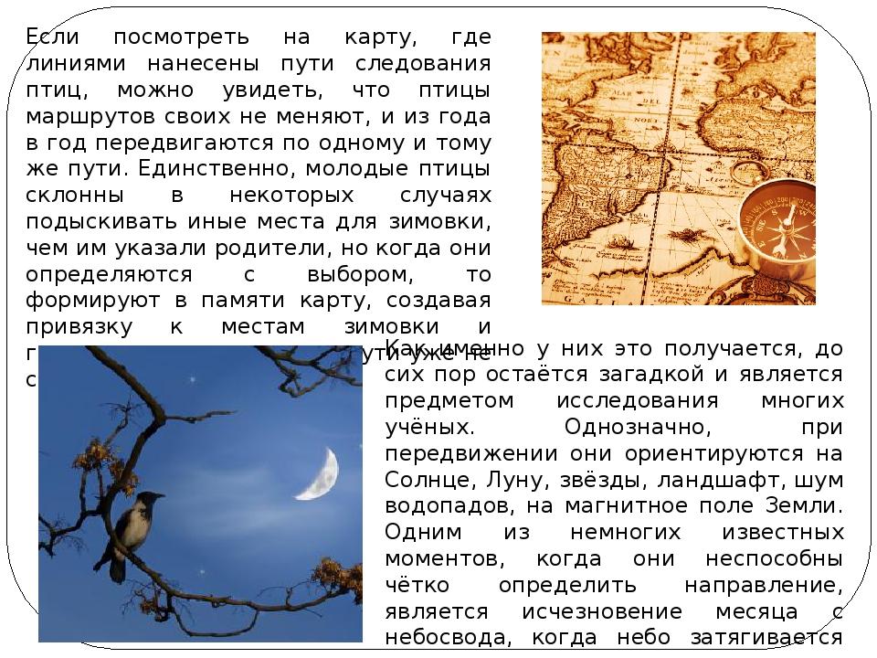 Если посмотреть на карту, где линиями нанесены пути следования птиц, можно ув...