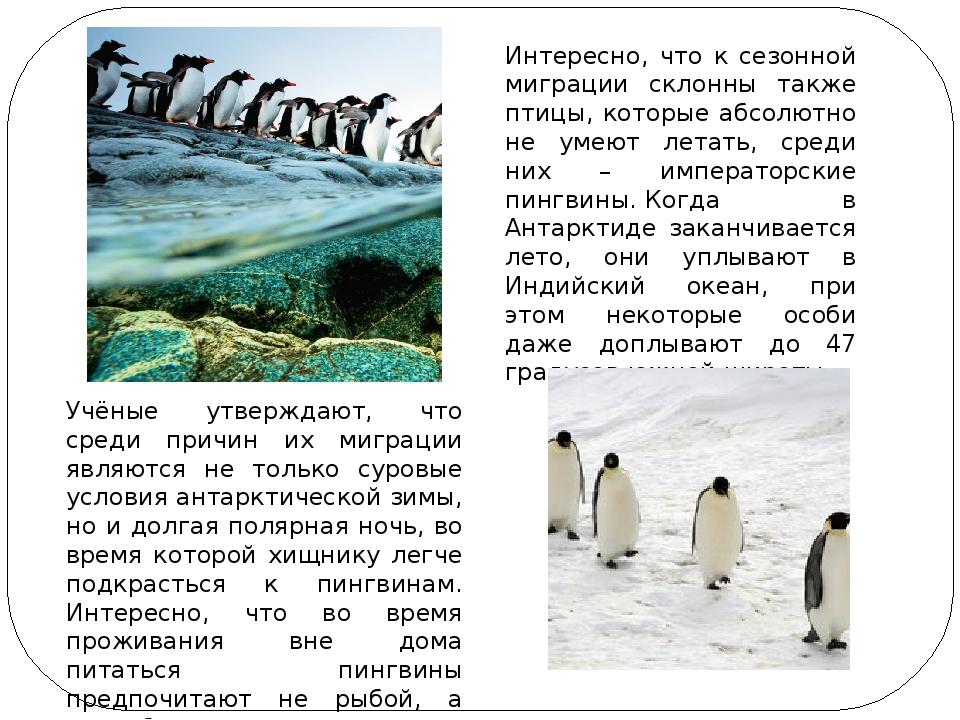 Интересно, что к сезонной миграции склонны также птицы, которые абсолютно не...