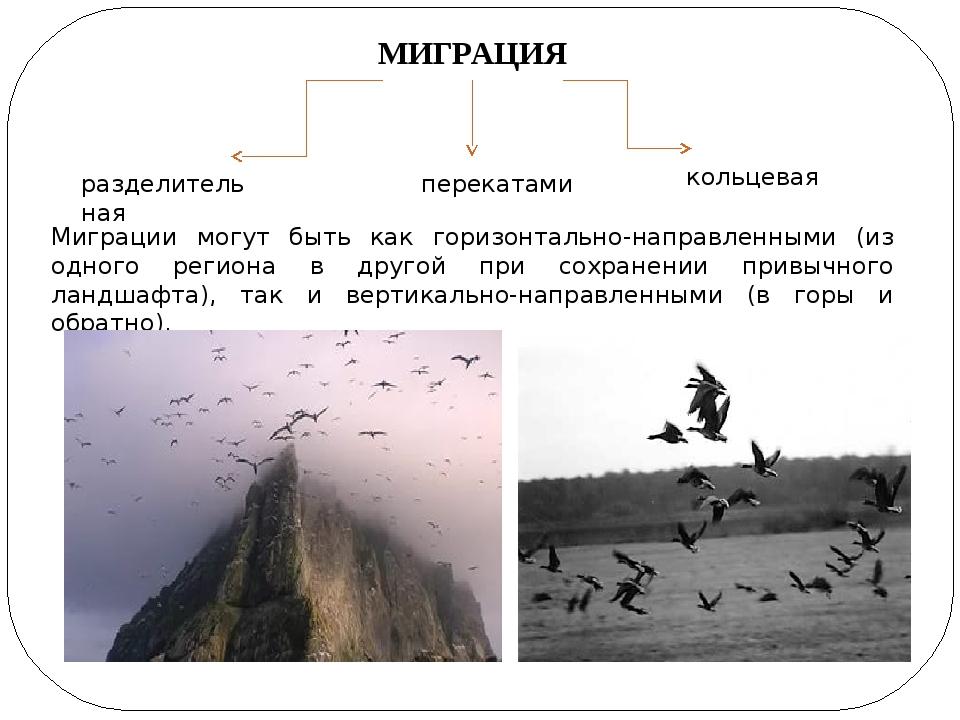 МИГРАЦИЯ разделительная перекатами кольцевая Миграции могут быть как горизонт...