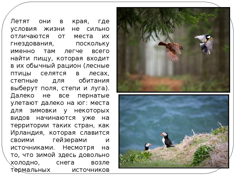 Летят они в края, где условия жизни не сильно отличаются от места их гнездова...