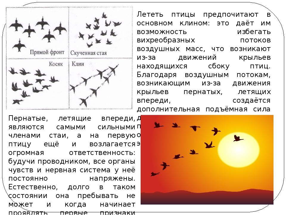 Лететь птицы предпочитают в основном клином: это даёт им возможность избегать...